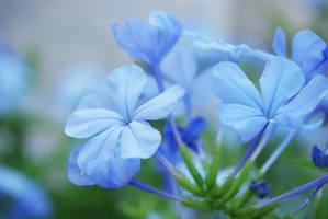 Blue Beauty by KaiaKristiina