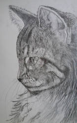 Cat  2 by ChocoBookworm