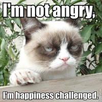 Grumpy Cat Meme 2 by jinxxnixx