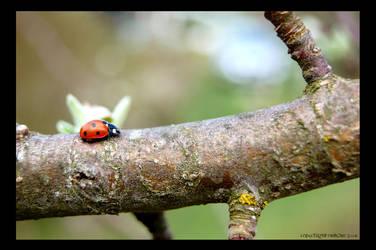 LadyBird by enikOne