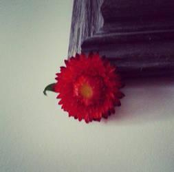 In the corner by beautifulbeginings
