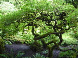 Tree 4 by raindroppe