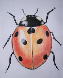 Coccinelle by OncleBeu