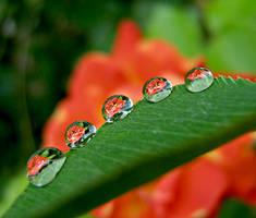 5 drops by hugara