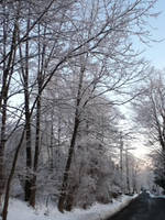 Snowy Trees by samiinction
