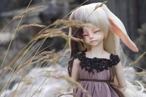 Tavi the rabbit by Lau-ry