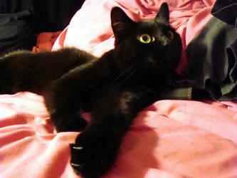 kitty. by nursenicole