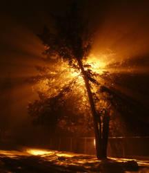 Night Burn by mygreymatter