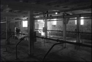 Milking Barn by mygreymatter
