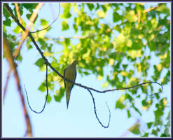 Dove by mygreymatter