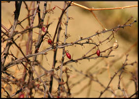 Thorny Red by mygreymatter