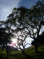 Tree Satisfaction by mygreymatter