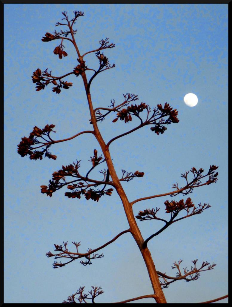 Alviso Moonrise by mygreymatter