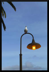 Bird on a Lamp Post by mygreymatter