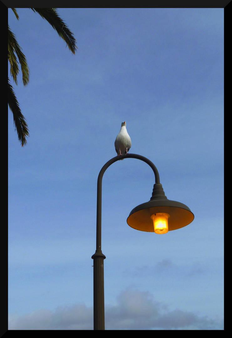 Bird on a Lamp Post by mygreymatter