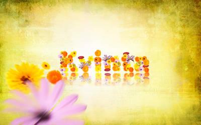 Kvinta United - Flower by Tomasos