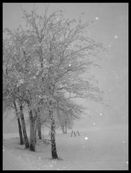 wonderland by madamBesson