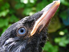 a bird named Sjaak by madamBesson