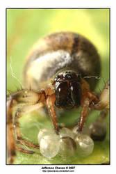 Arachnophobia by jotachaves