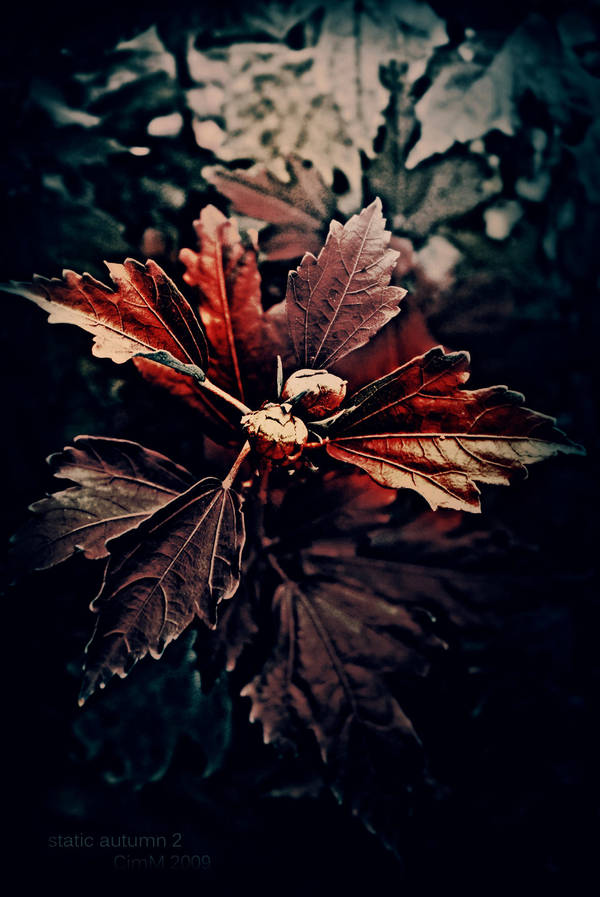 static autumn 2 by cimmx