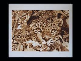 Panthera pardus Linnaeus by ddntati