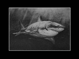 il grande squalo bianco by ddntati