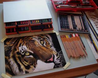 tiger, color by ddntati