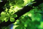 My Green Soul by PetalDreams
