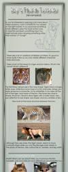 Feline Tutorial -revamped- by 1skylight1