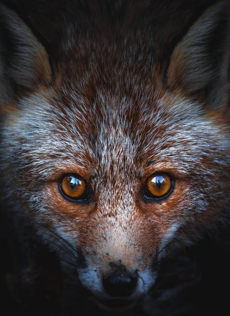 Fox Eyes by manurs