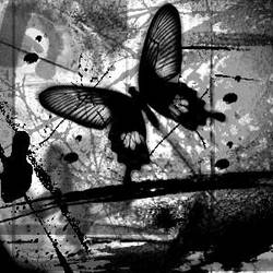black and white butterfly by m3ntalysan3