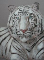 White Tiger by OneWindCatcher