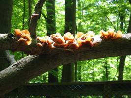 Fungus by isostatic