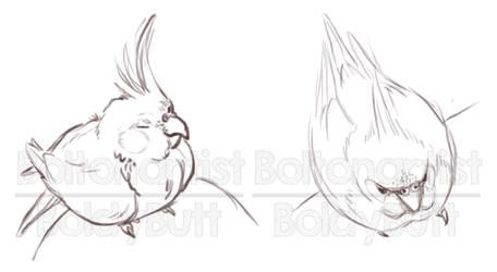 14/5 Bird doodles by Boltonartist