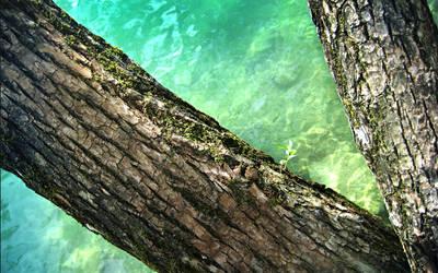 tree at the shore  wallpaper by denkyo