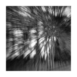 Fast trees II by michref