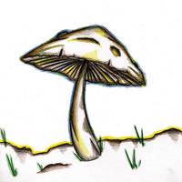 Lonely Mushroom by explotin