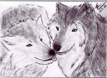 Two wolves, loving by Icewolfi