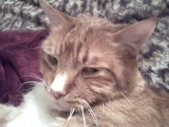 Hey! I Was Sleeping! by KittySib