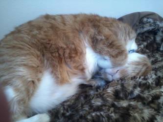 Snoozing Away by KittySib