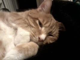Too Cute To Resist by KittySib