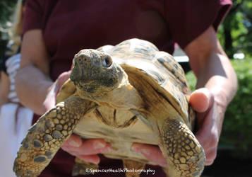 Turtle! Turtle! by SpencerHeath