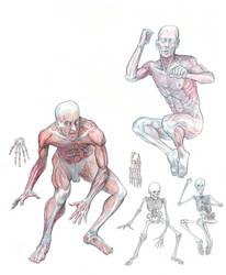 Anatomy by Zainy7