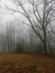 winter foggy forest bg by wroquephotography