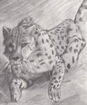 Cheetah by VampireSessh