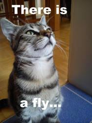 My cat by lulululi