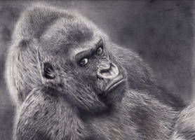 Gorilla by daniluc78