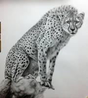 cheetah - work in progress step 5 by daniluc78
