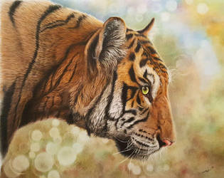 Tiger by daniluc78