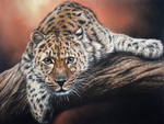 Leopard by daniluc78